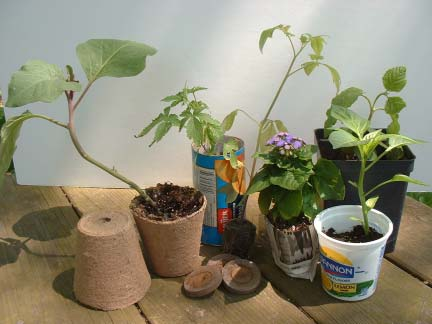 Several plant seedlings in different pots