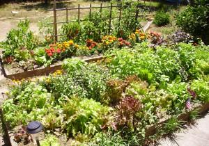 Raised bed flower and vegetable garden